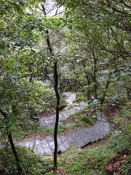 091031陽明山・樹林帯