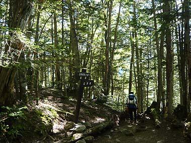 100719北岳下山樹林の道