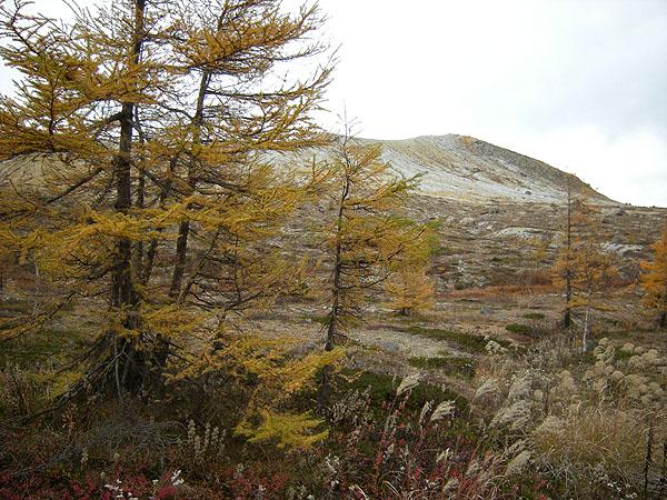 101024草津白根山とカラマツの紅葉