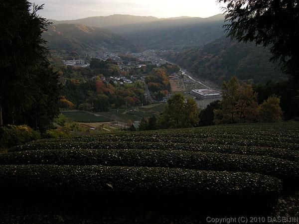 101121丹沢・茶畑