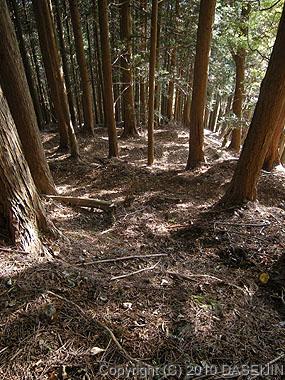 101121丹沢・くぬぎ山の下り