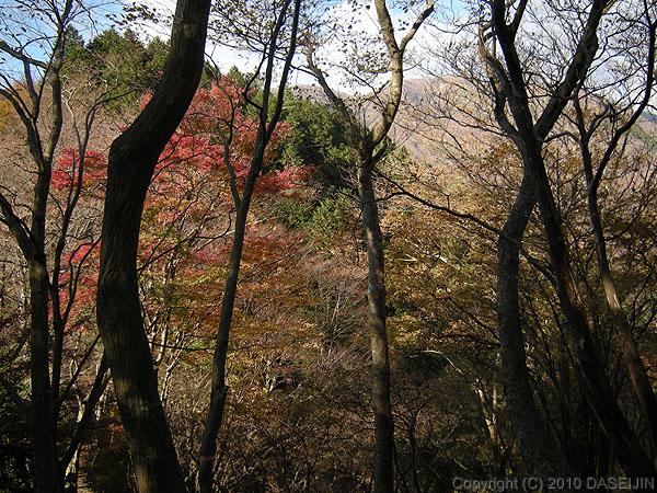 101121丹沢・栗木ノ洞から塔ノ岳