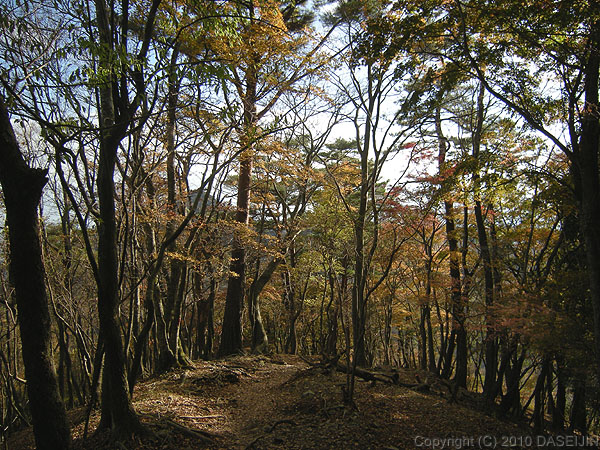 101121丹沢・鍋割山下山路の紅葉