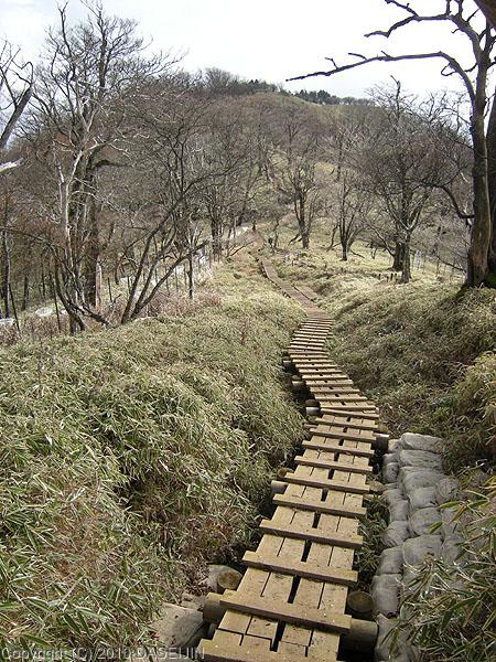 101121丹沢・丹沢山からの下りブナの林