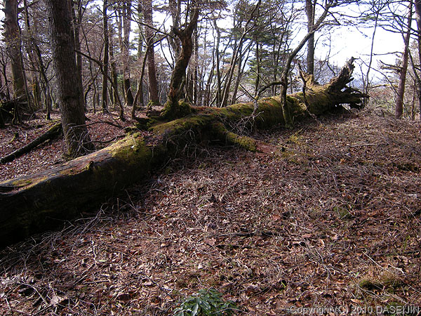 101121原木屋平あたりは苔が美しい