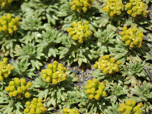 110104パイネ国立公園・小さい花2
