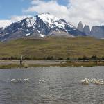 岩と花とグアナコと~南米・パタゴニアの旅(15)