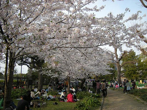 110410日比谷公園のお花見