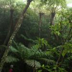 不思議の森、石門トレッキング~小笠原諸島の旅(4)