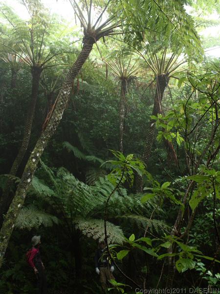 110501小笠原母島石門のマルハチの森