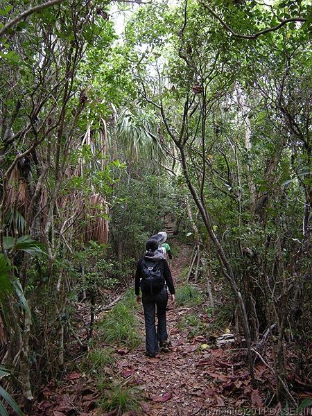 110502小笠原母島乳房山の登山道は森の中