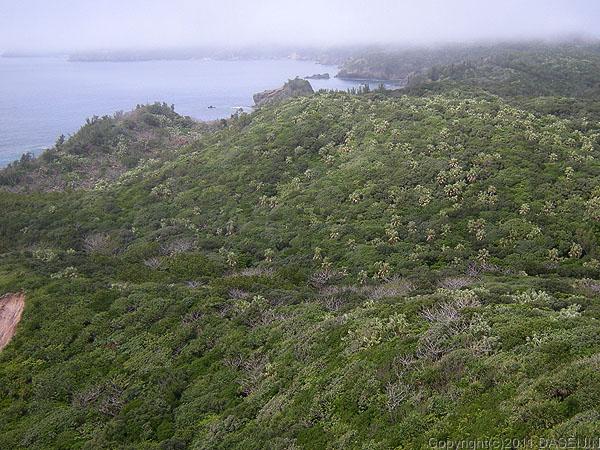 110503小笠原母島小富士から来た道