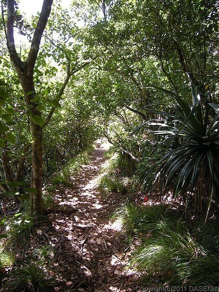 110503小笠原母島森の中の南崎遊歩道