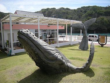 110504小笠原母島観光案内所の横のクジラ