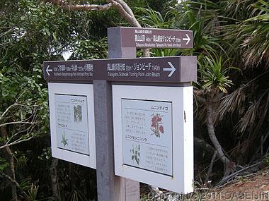 110506小笠原父島・高山の分岐