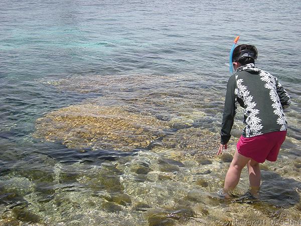 110506小笠原父島・波打ち際の枝サンゴ