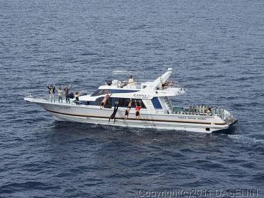 110507小笠原父島・見送りの船から飛びこんだ