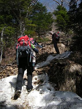 110604八ヶ岳地蔵尾根、樹林帯は雪がある
