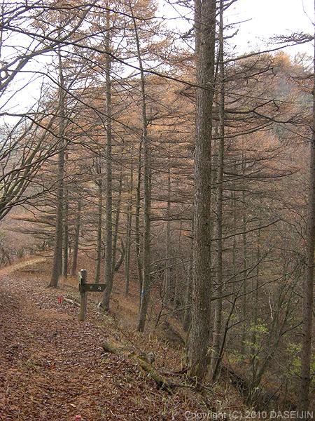 101121焼山から黍殻山へ縦走路