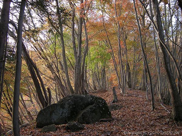 101121焼山尾根標高650m付近の紅葉