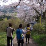 桜の陣馬山