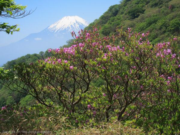 170527ミツバツツジと富士山