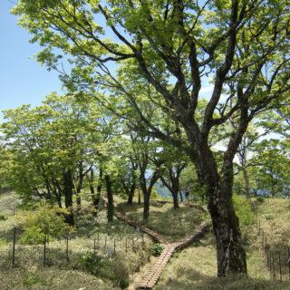 170527塔ノ岳へのブナの道