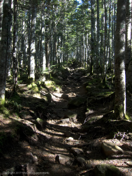170924山びこ荘から先は樹林帯の道