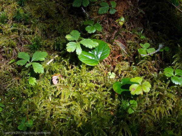 170924樹林の中の小宇宙