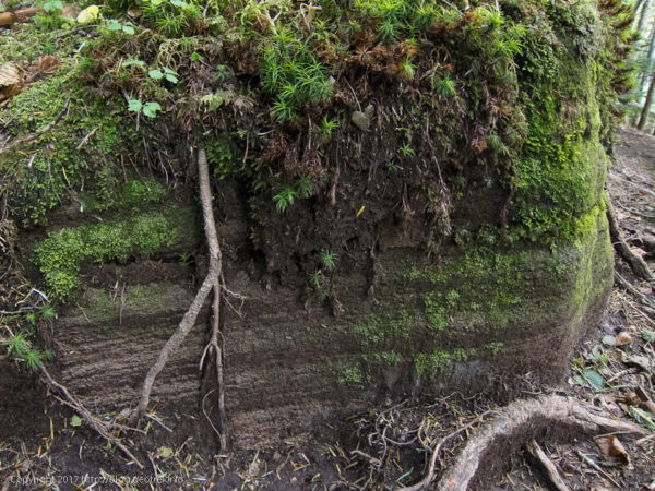 170924樹林帯の土の層