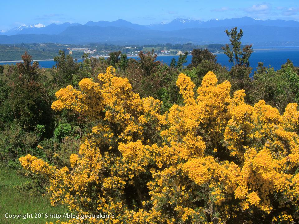 171124 テングロ島の花