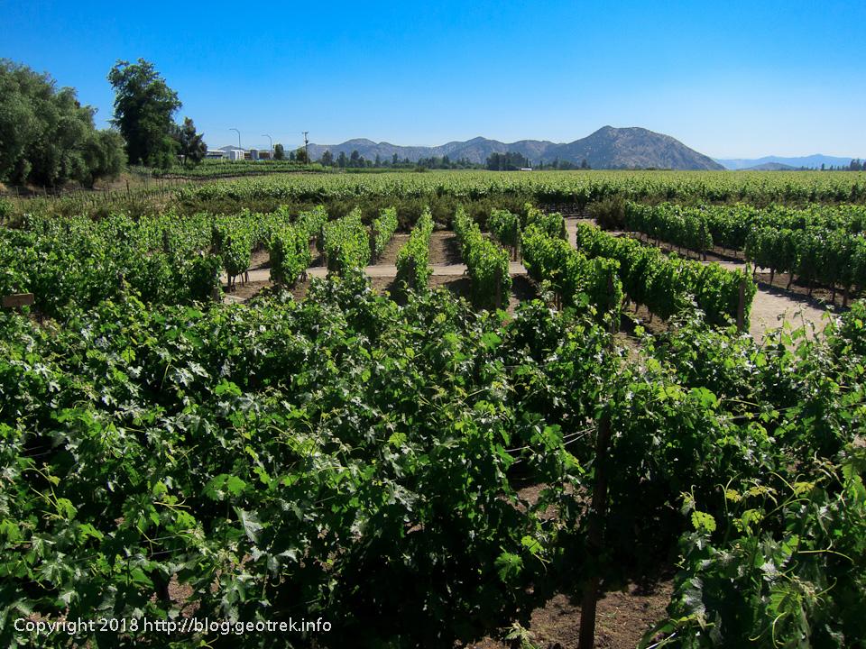 171125 コンチャイトロのブドウ畑