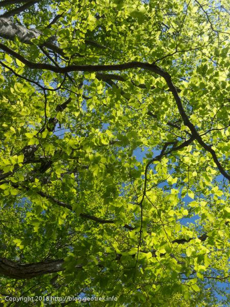 180512 石尾根の緑