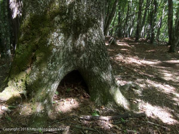 180630 ブナの木のむろ