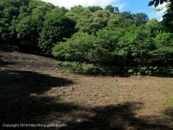 180630 謎の湿地