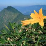 カラ梅雨の谷川岳~谷川岳・蓬峠(1)