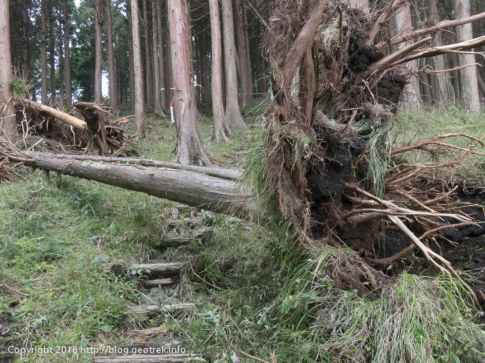 181003 三ノ塔尾根の倒木