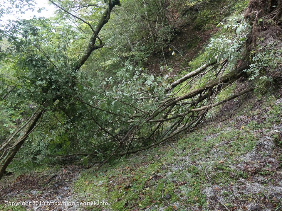 181007 ユーシンロッジへは倒木で通行できない