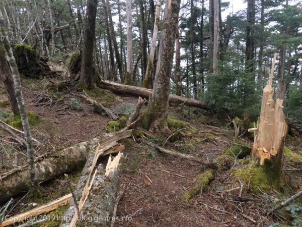 181020 川胡桃沢ノ頭の先の倒木帯