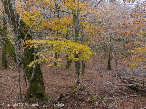 181020 黒岳からの広葉樹林