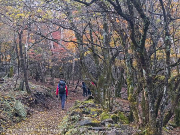 181020 大菩薩峠への登り