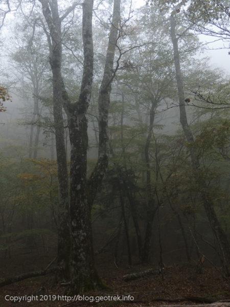 181020 ハマイマバル先の樹林