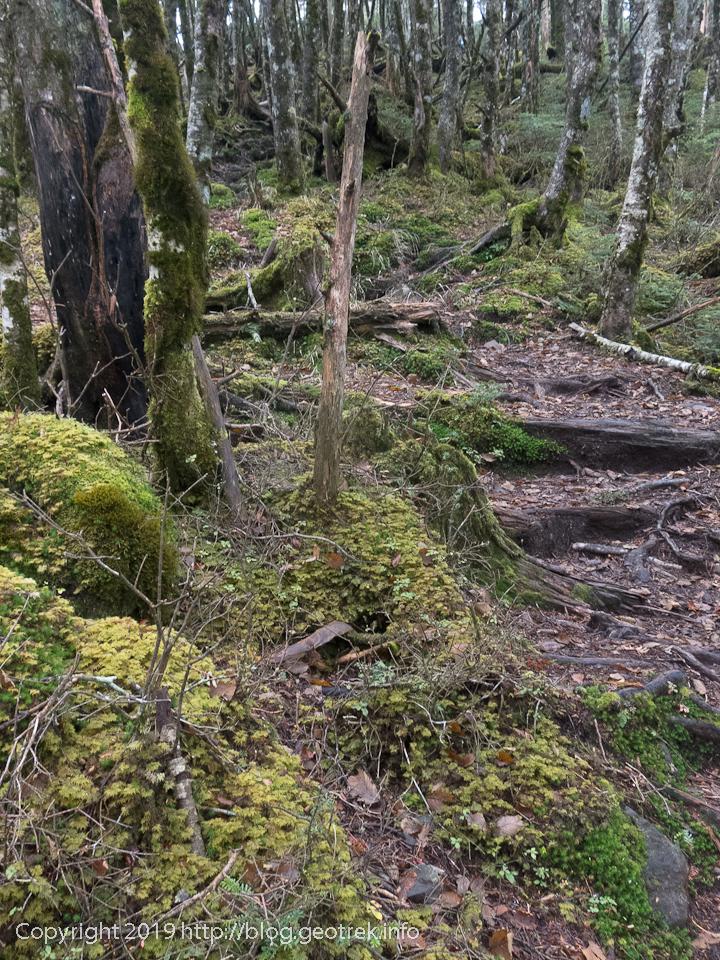 181020 小金沢山の登りの樹林