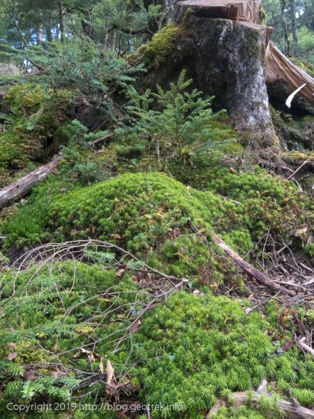 181111 苔の森