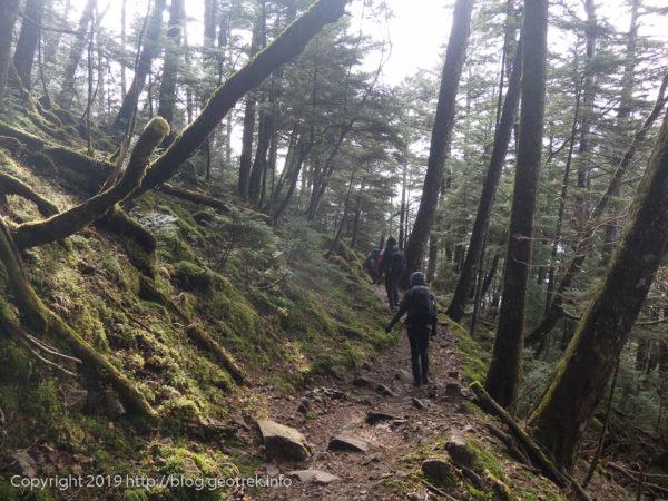 181111 苔の森を丸川峠へ下る