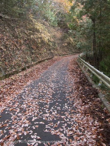181208 林道の落ち葉