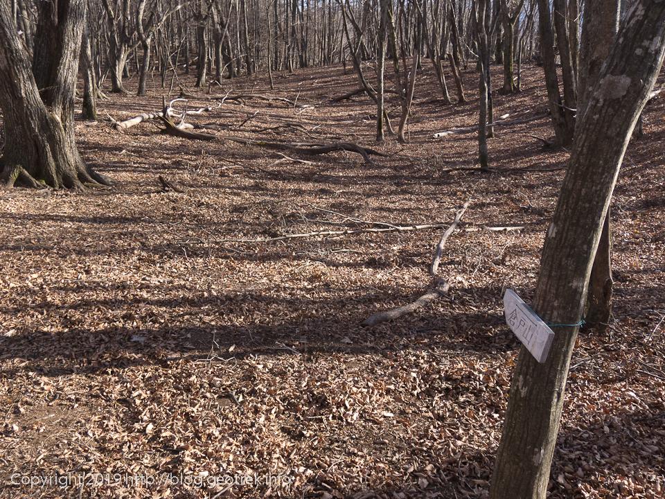 190119 榧ノ木尾根は落ち葉で道が分かりにくい