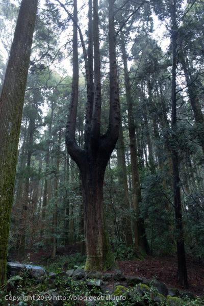 霧島神社本殿裏の森
