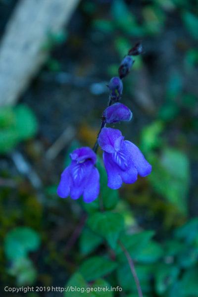 190501 マチュピチュの小さい花1