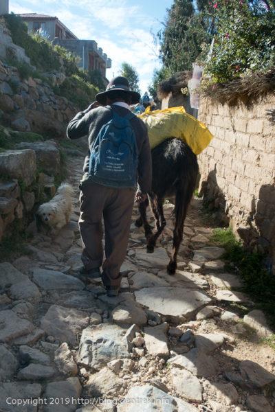 190504坂を登るロバ